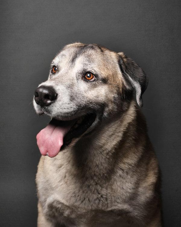 King Community Dog
